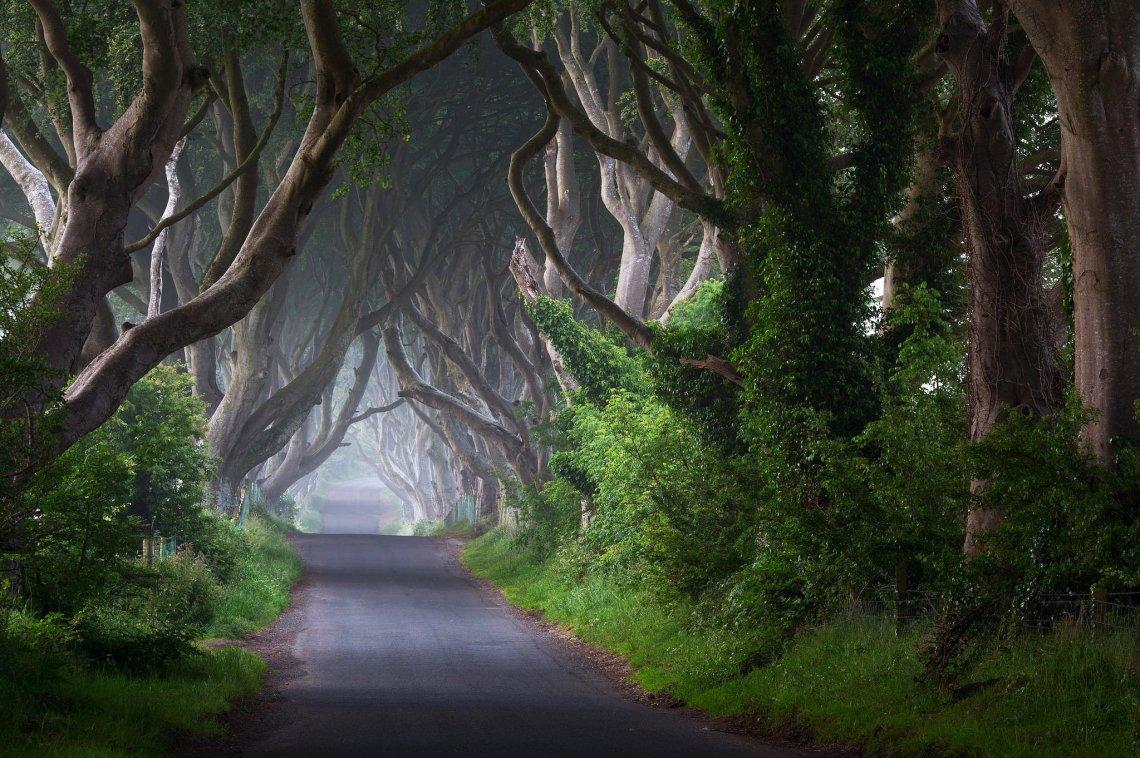 Ireland road trees
